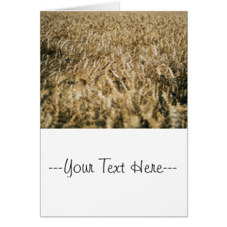 Summer Wheat Field Closeup Farm Photo Card