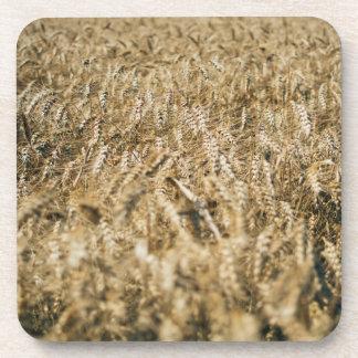 Summer Wheat Field Closeup Farm Photo Coaster
