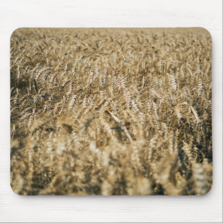 Summer Wheat Field Closeup Farm Photo Mouse Pad