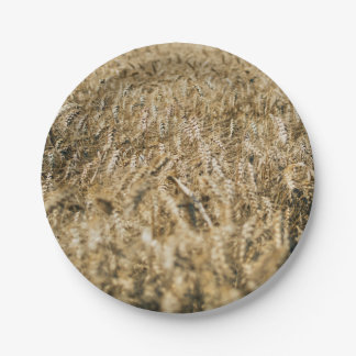 Summer Wheat Field Closeup Farm Photo Paper Plate