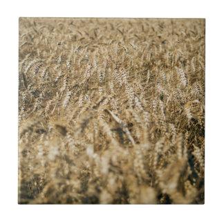 Summer Wheat Field Closeup Farm Photo Tile