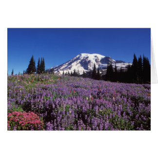 summer wildflowers at the base of Mount Rainier, Card