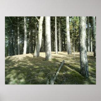 Summer Woodland Scene Poster