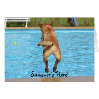 Summer's Here Dog Card