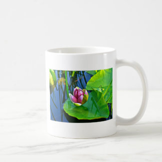 Summery ode ton the Water Lily Coffee Mug