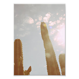 Sun and Cactus Photo Print