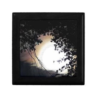 Sun And Pin Oaks Gift Box