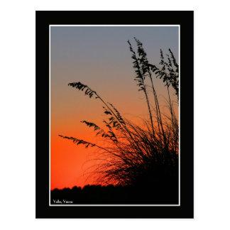 Sun and Sea Grass Postcard