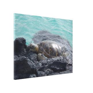 Sun basking sea turtle Kiholo Bay Hawaii canvas Gallery Wrapped Canvas