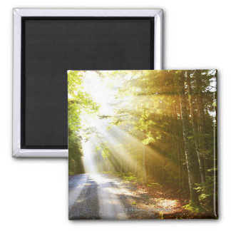 Sun Beams Through Forest in Acadia National Park Square Magnet