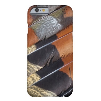 Sun Bittern feather detail Barely There iPhone 6 Case