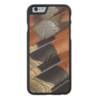 Sun Bittern feather detail Carved® Maple iPhone 6 Case