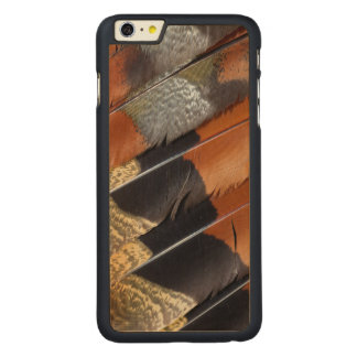 Sun Bittern feather detail Carved® Maple iPhone 6 Plus Case