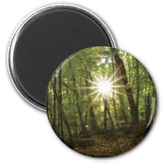 Sun breaks through woods magnet