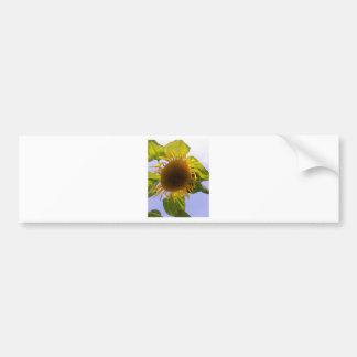 Sun bursting Sunflower Bumper Sticker