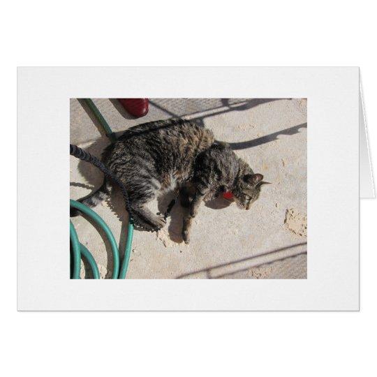 Sun Cat Card