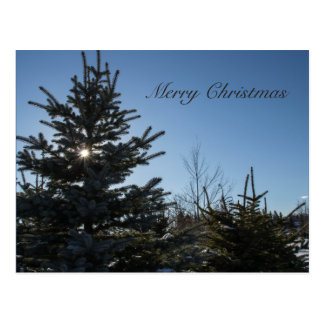 Sun coming through a fir tree - Merry Christmas Postcard