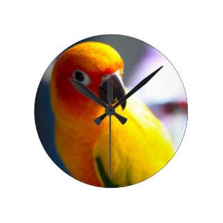 Sun Conure clock