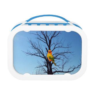 Sun Conure Lunch Box