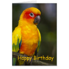 Sun Conure Parrot Blank Birthday Card