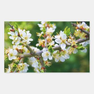 Sun-Dappled Spring Hawthorn Sticker