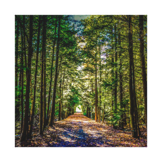 Sun Down in the Colorful Woods Canvas Print