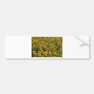 _sun flower field bumper sticker