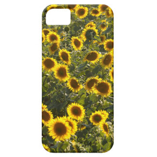 _sun flower field case for the iPhone 5