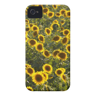 _sun flower field Case-Mate iPhone 4 cases