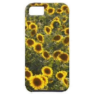 _sun flower field iPhone 5 cover