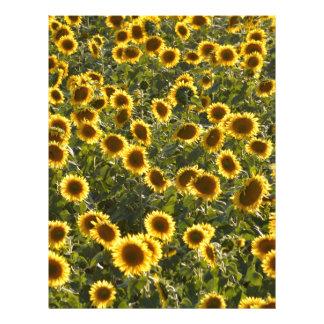 _sun flower field letterhead
