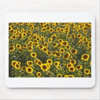 _sun flower field mouse pad