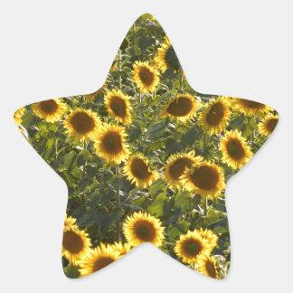 _sun flower field star sticker