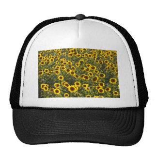_sun flower field trucker hat