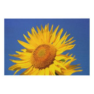Sun-flower Wood Print