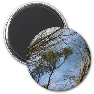 Sun Kissed Branches 2 Inch Round Magnet