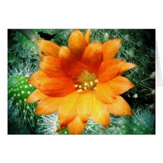 Sun Kissed Desert Flower Thank You Notes