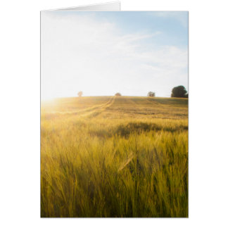 Sun over wheatfield card