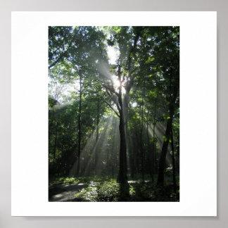 Sun Rays, Misty Morning Poster