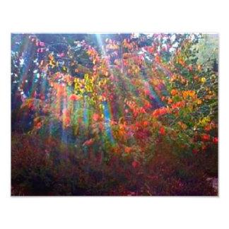 Sun Rays Print