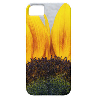 Sun rising case for the iPhone 5