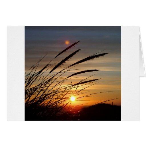 Sun Set Cards