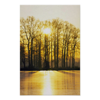 Sun Sets Over High Trees Poster