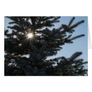 Sun shining through a fir tree card