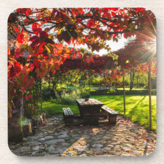 Sun through autumn leaves, Croatia Coaster