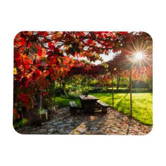 Sun through autumn leaves, Croatia Rectangular Photo Magnet