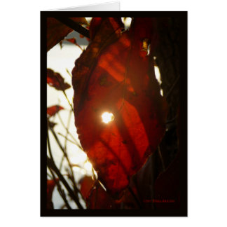 Sun Through Red Leaf Card