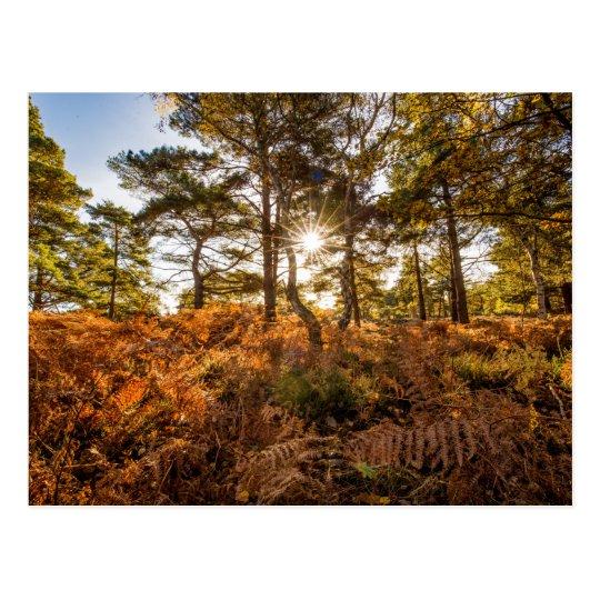 """Sun through the trees"" postcards"