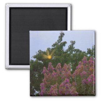 sun through trees square magnet