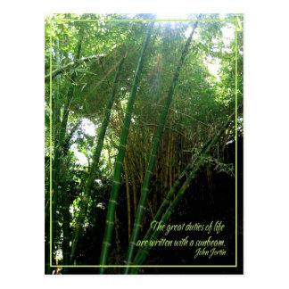 Sunbeam Postcard